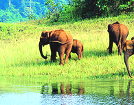 Kerala tour packages ,Kerala honeymoon packages ,Holiday packages in Kerala