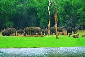 Kerala tour packages, Kerala honeymoon packages, Holiday packages in Kerala